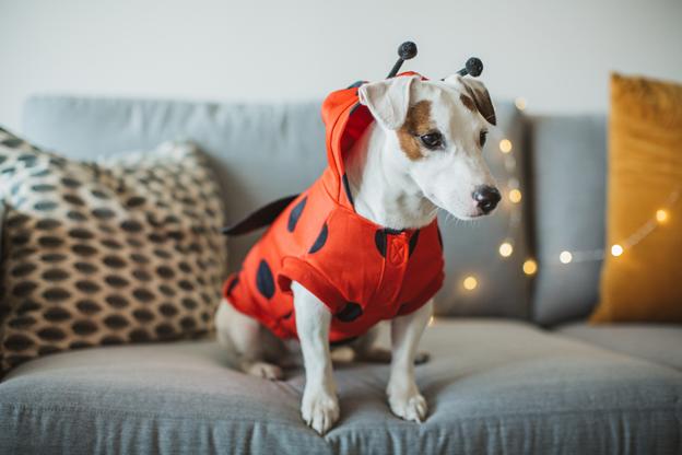 pet halloween safety tips